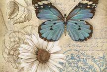 Papatyalı kelebek