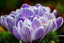 tavasz, spring / A természet színei.