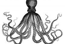 Vintage clip art Octopus