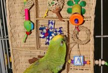 hračky pro papoušky, stromy...