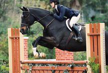 kone a jazdci