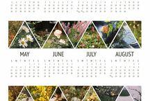 Calendars / by Michelle Johnson