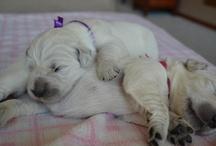 Puppies - 2012 / by Dawn Betler