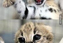 Kitty Funnies / by Kathryn Eberhart