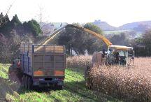 O Kane Harvesting