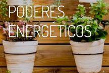 Plantas con poderes energéticos
