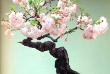 Beautiful trees / by Aubrey Redding
