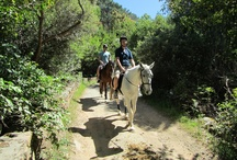 Wine and Horse Riding Hout Bay