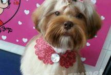 moda Pet Shop