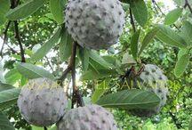 world strangest exotic fruits