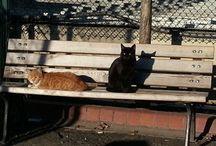 Kedi fotoğrafları serisi