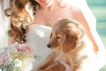Fuzzy Helpers / Animals and pets as weddings guests!