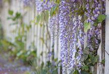human garden ~*~