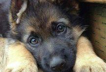 Mein Traumhund...