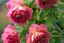 blommor trädgård / vackra växter