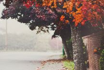 autumn / shedding trees