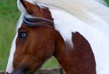 Horses-My Favorite Creatures #2 / by Teri Hankins