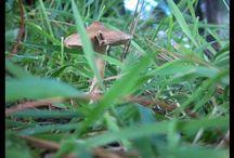 Mes Beaux petits Champignons ... / J'adore le monde des Champignons... Plein de Magie!!