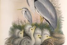 Art of Herons