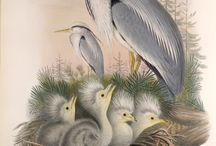 Art of Herons