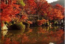 Kyoto, Japan / Beautiful photographs and general info