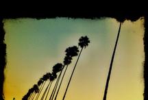 L.A. WE LOVE IT / by Stephanie Talavera