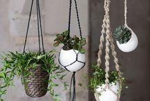 plants&naturals&vintage&hippie