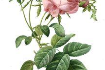 ARTE FLORES ROSE