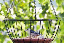 Bird feeder/baths