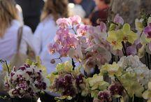 Una domenica con i bambini tra fiori, profumi e auto d'epoca / Una domenica a Milano con i bambini tra fiori, profumi e auto d'epoca