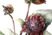 ботаника и акварель