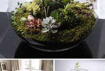 Greenery ideas / Plants for very small places