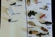 Montessori Science for Kindergarteners