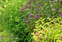 Vernonia Combinations / Plant partnerships that include ironweeds