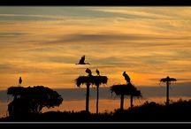Amanecer & Puesta de sol- Extremadura / Salida del sol Tiempos de puesta del sol de Extremadura, España   Zona horaria: Europa / Madrid Hora Actual: 2017-08-30 06:35:39 Longitud: -6.0679194 Latitud: 39.4937392 Amanecer Hoy: 07:51:07 AM Puesta del sol Hoy: 08:58:26 PM Día de la semana Hoy: 13h 7m 19s Salida del sol mañana: 07:52:02 AM Puesta del sol Mañana: 08:56:53 PM Duración del día Mañana: 13h 4m 51s  Fuente: http://sunrise.maplogs.com/extremadura_spain.81261.html
