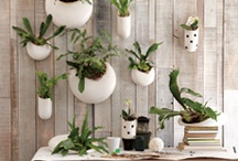 outdoor decor / ideas for the DNI front and backyard