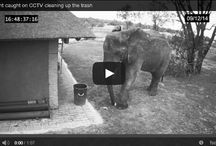 Elephant Cleans up