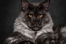 Kattenbord