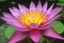 Növények - virágok