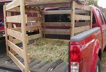 Livestock Pickup trucks