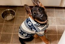 Pets Playing Dress-Up/Pet Costumes