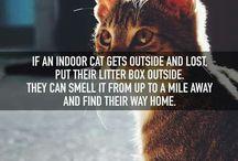 I'm Getting A Kitten!