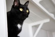 Simone, the Store Cat / all photos © Casa Ruim