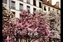 Le printemps à Lyon