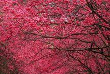 Trees / by Adeline Nobel