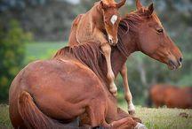 Cavalominhapaixao