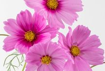 Photo flowers, plants