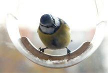 Storybird - Bird feeders / Hi, welcome to Tweet Resto Bar Storybird :) http://uczarczyk.pl/projects/storybird/