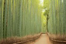 素敵な日本