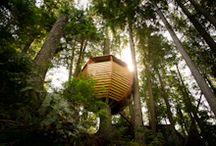 Tree House / Cool Tree Houses